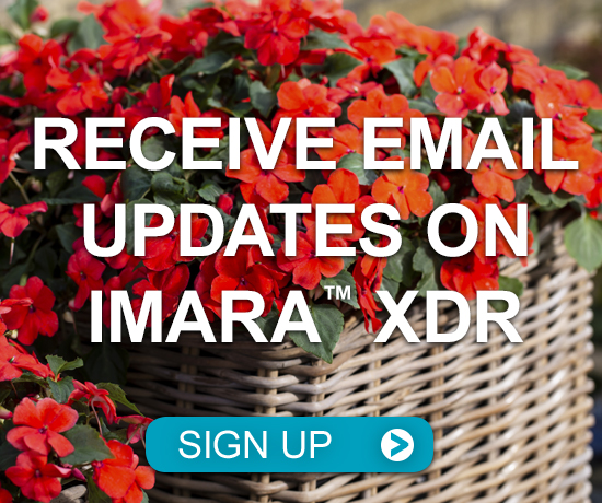 Receive Email Updates on Imara XDR