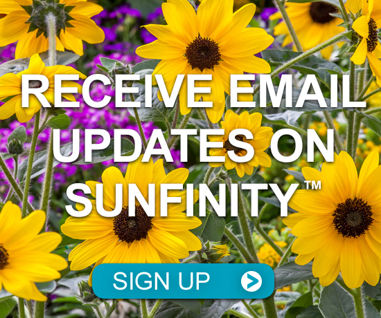 Receive Email Updates on Sunfinity
