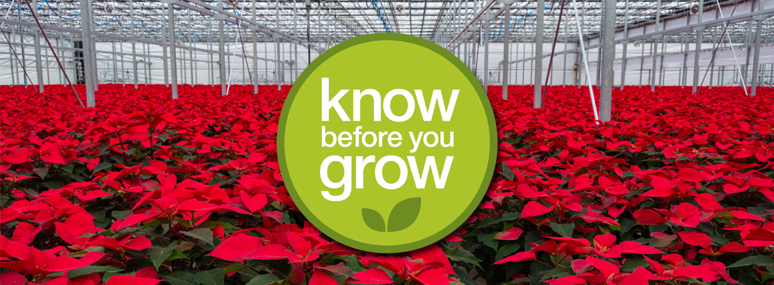 Know Before You Grow Workshop Poinsettias and Mums