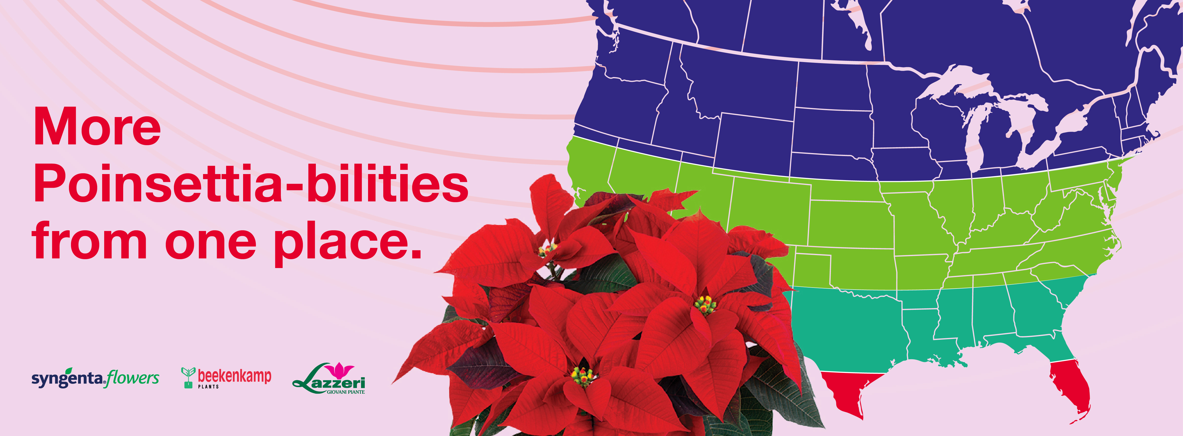 Poinsettias by Regions