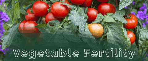 Vegetable Fertility Basics for Flower Growers