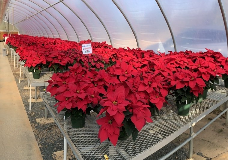 Overview of a Trial Greenhouse at NC State Trials