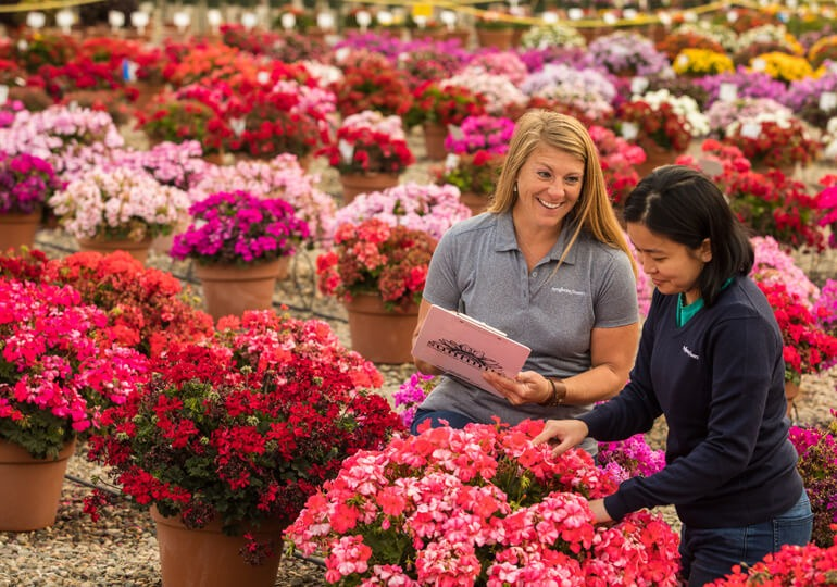 Syngenta Flowers trial specialists in the field evaluating new varieties for growers, retailers, and brokers.