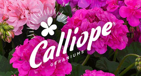 Power Brand: Calliope