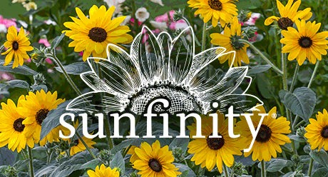 Power Brand: Sunfinity Sunflower