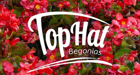 Power Brand: Tophat Begonia