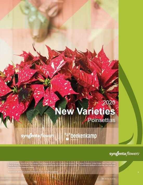 2020 Poinsettias New Varieties