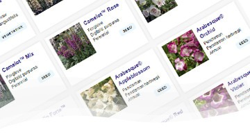 Cut Flowers Product Search
