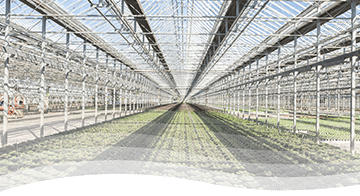 Tech Articles from Syngenta Flowers